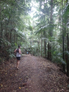 Beautiful rainforest trails.