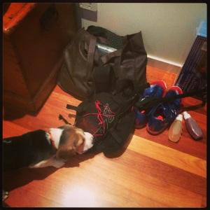 Beagle sabotage.